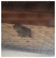 Palm Beach County Bat Exclusion