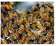 Palm Beach and Wellington Bees and Wasps Removal