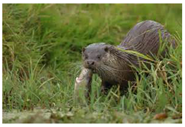 Palm Beach County Otter Removal